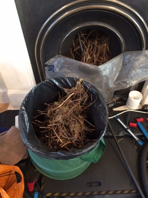 Chimney Birds Nest Removal